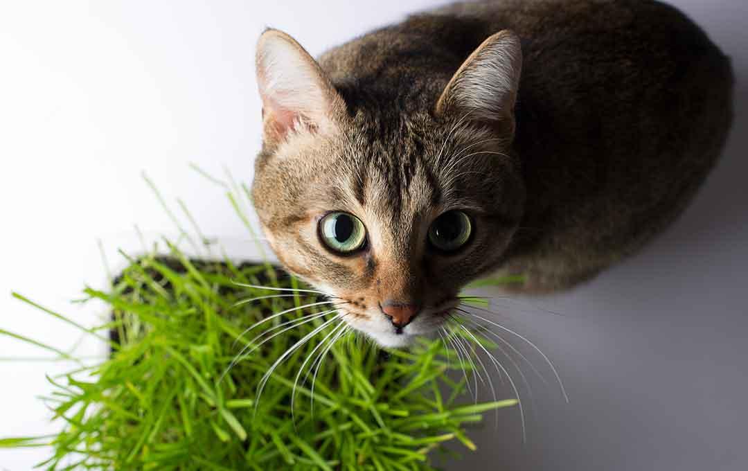 giftige-pflanzen-fuer-katzen-so-erkennst-du-sie