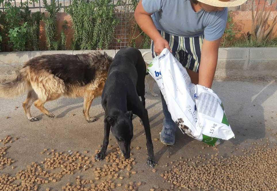 Beitrag-Magazin-Futterspenden-Hunde