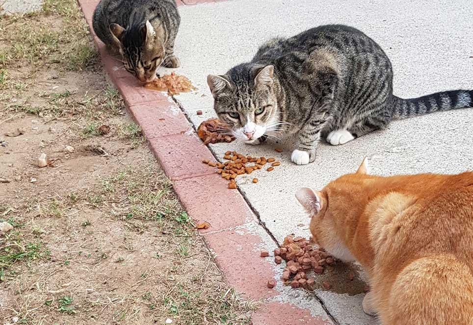 Beitrag-Magazin-Katzen-fressen-neu