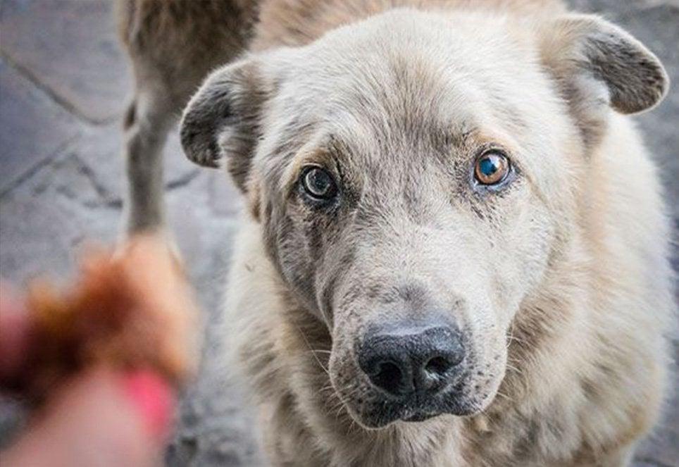 Hungriger-Strassenhund
