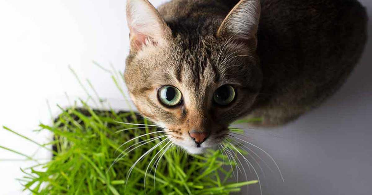 giftige-pflanzen-katzen