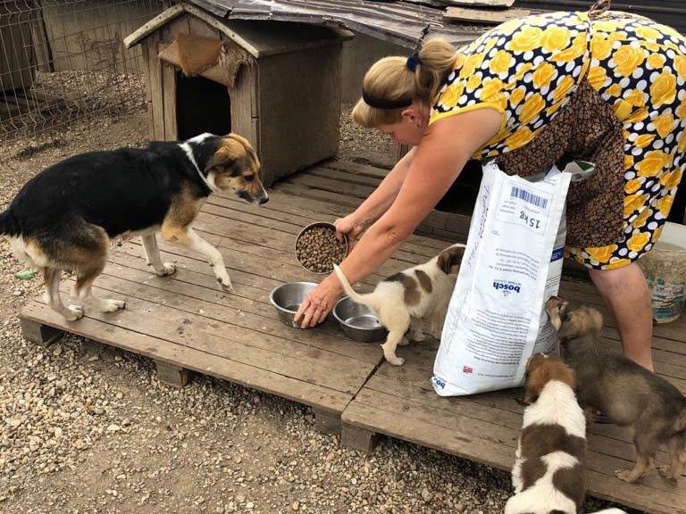 Aktion Tierisch Happy eV_Corona_Rumänien (1)