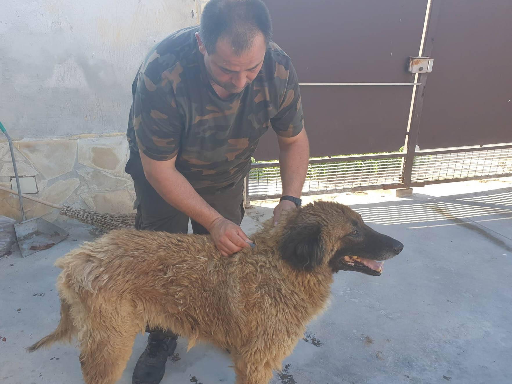 Animal Respect eV_Spoton_Italien (4)