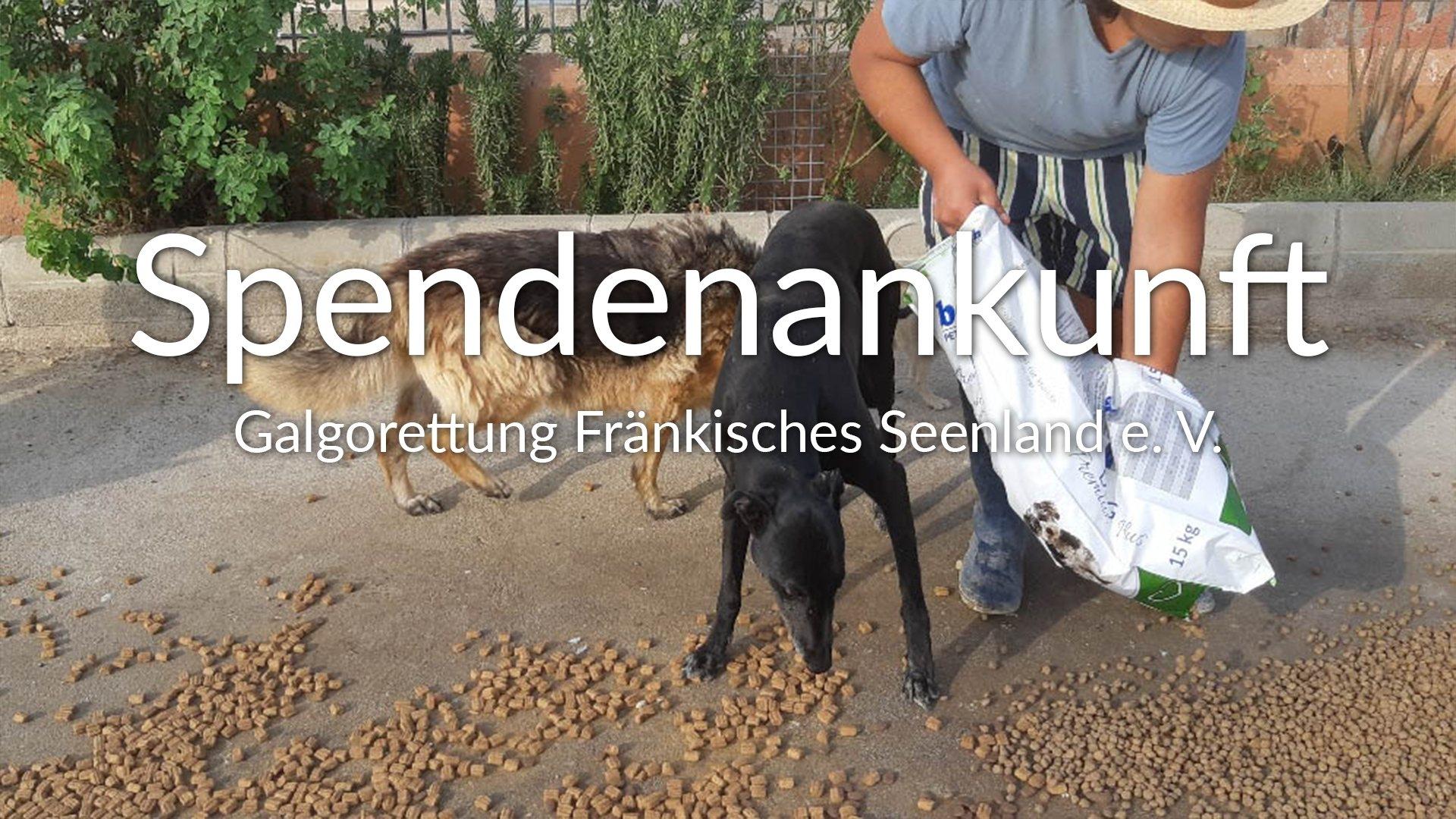 Galgorettung Fränkisches Seenland_Galgo Aktion_Spanien_Thumbnail