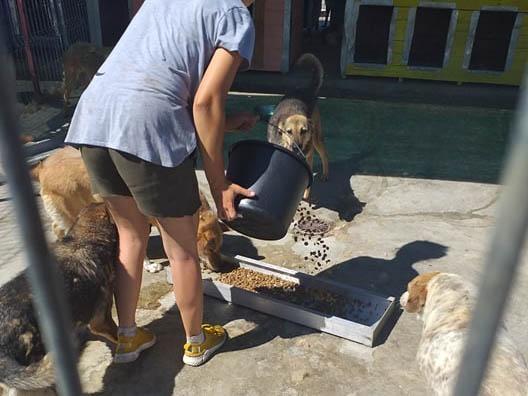 Hunde in Satu Mare eV_Corona_WL_Rumänien (9)
