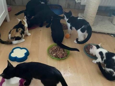 Katzen in Not eV_WL_Deutschland (3)