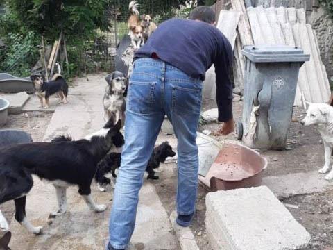 Sammelstelle für Tiere in Not eV_WL_Rumänien (3)