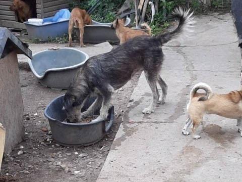 Sammelstelle für Tiere in Not eV_WL_Rumänien (4)