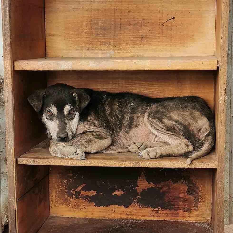Tierheim_des_Monats_Halona_for_Dogs_Neu