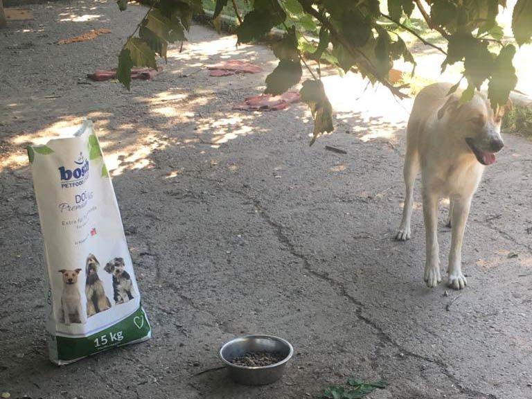 Weisse-Schäferhund-Nothilfe e (1)