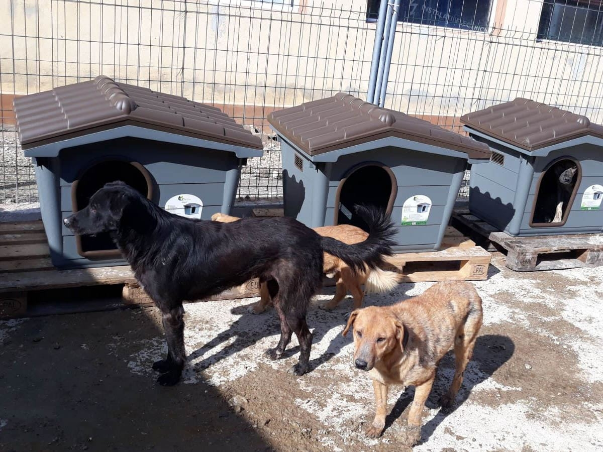 Halona für Dogs eV_ThdMSeptember2020_Rumänien (1)