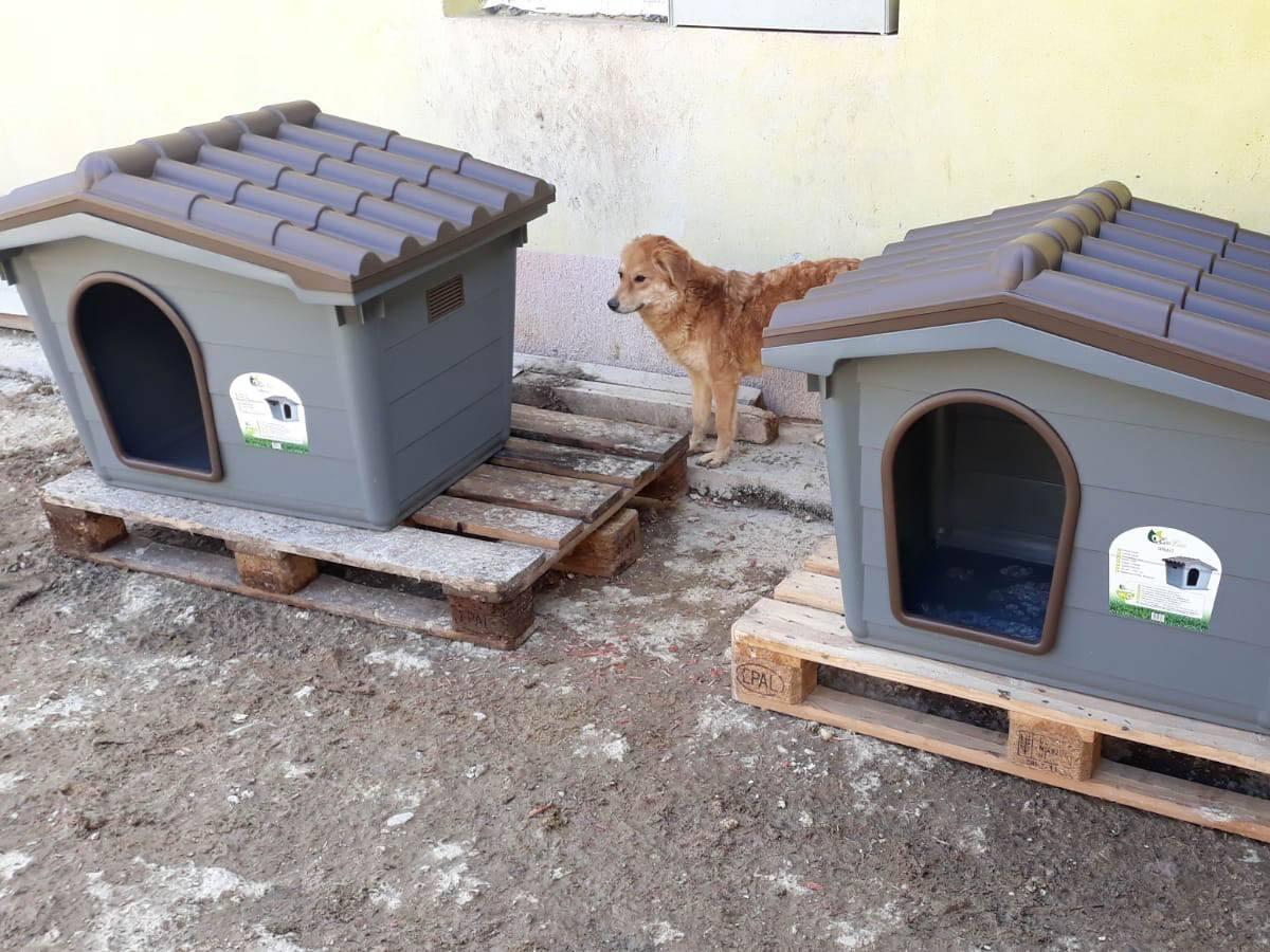 Halona für Dogs eV_ThdMSeptember2020_Rumänien (2)