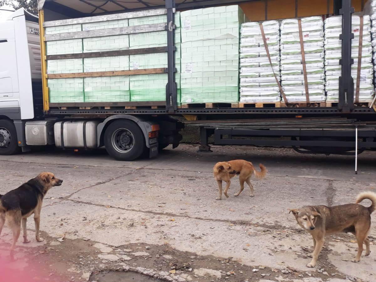 Halona for Dogs eV_ThdM September_Griechenland (12)