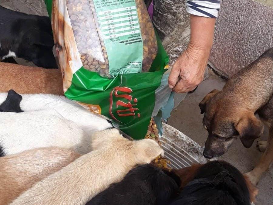 Halona for Dogs eV_ThdM September_Griechenland (6)