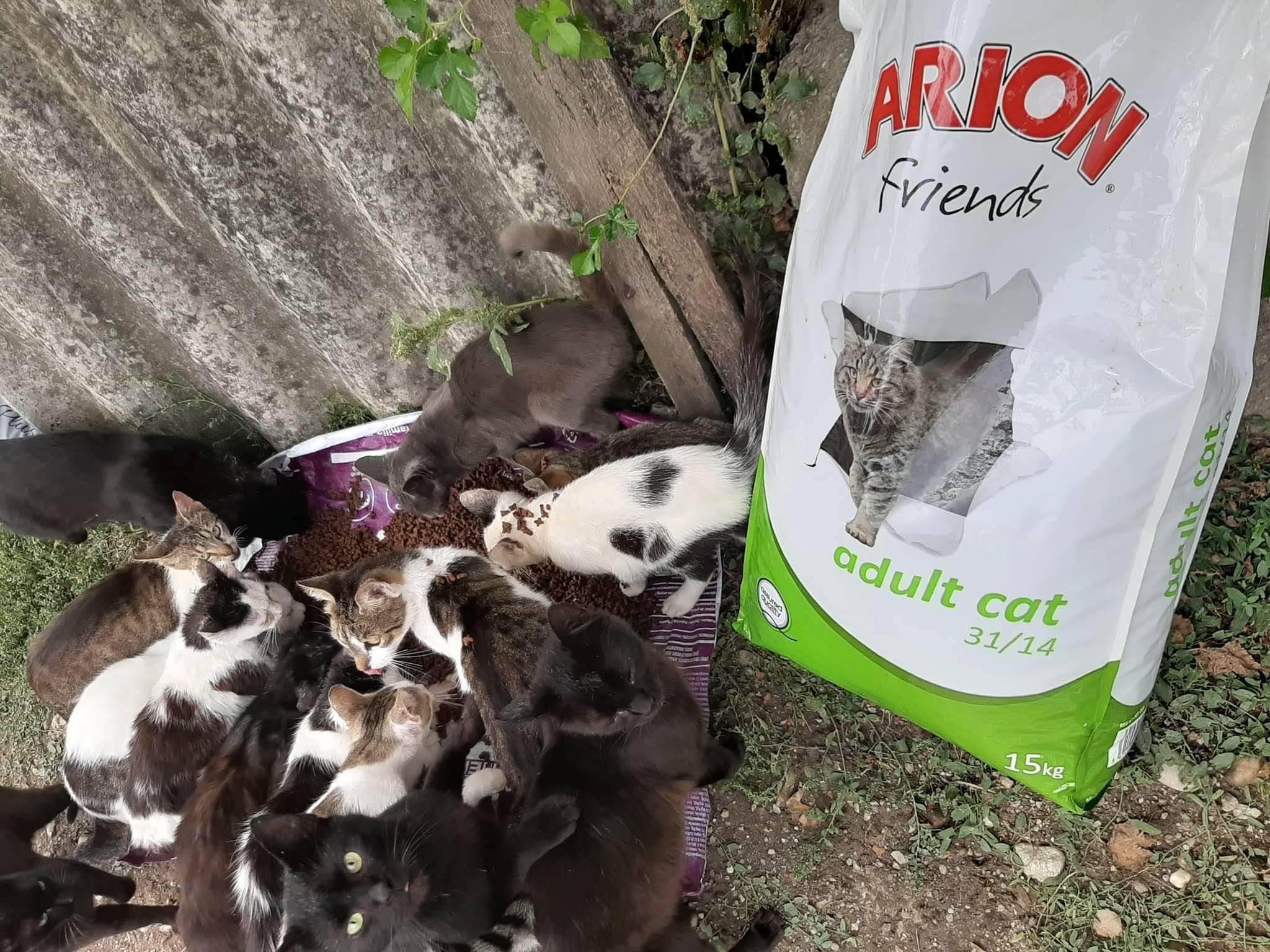 Sammelstelle für Tiere in Not eV_Corona_Deutschland(3)