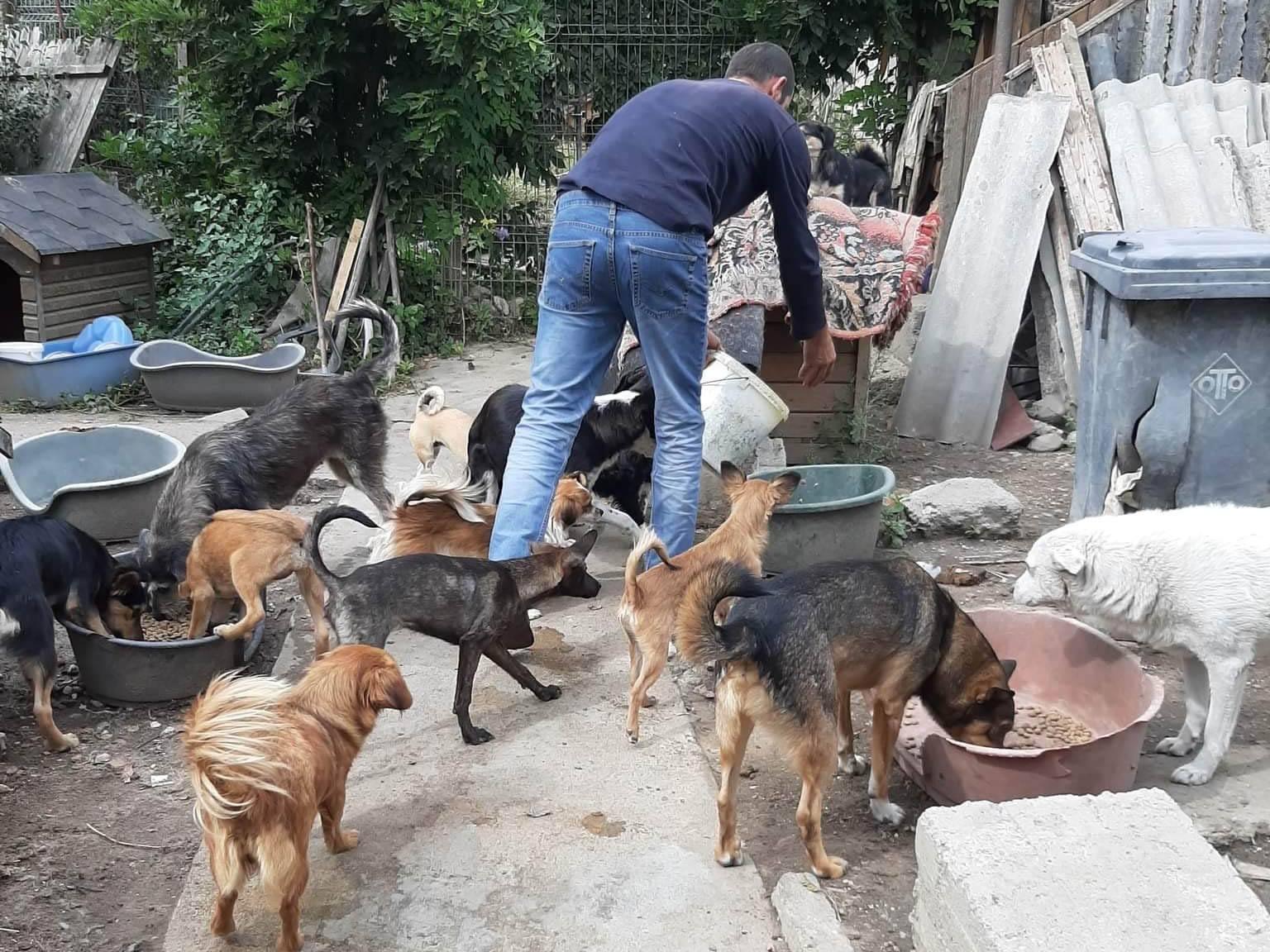 Sammelstelle für Tiere in Not eV_Corona_Deutschland(6)