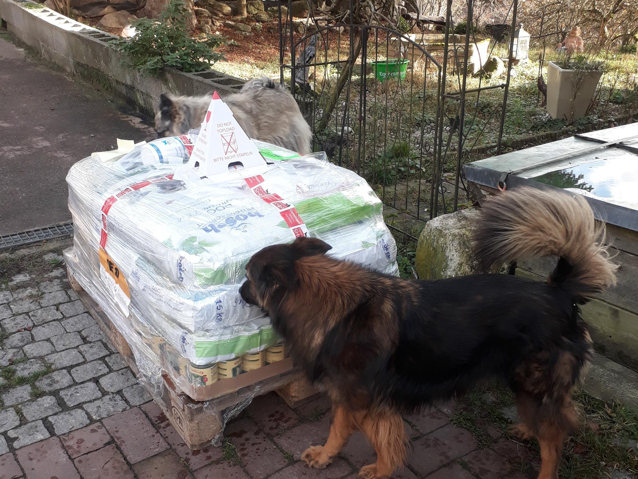 Tierschutzhunde Russland eV_WL_Deutschland1