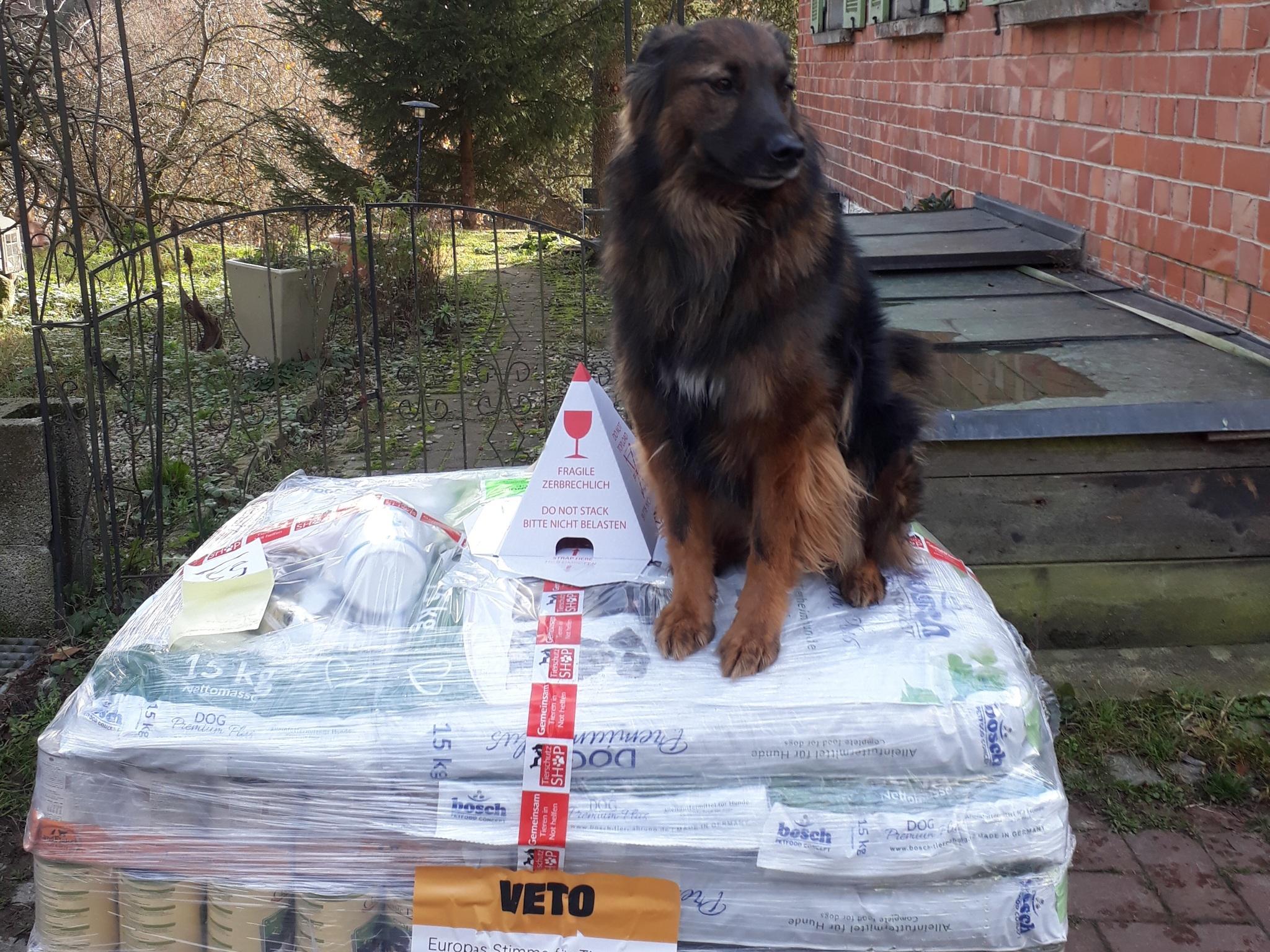 Tierschutzhunde Russland eV_WL_Deutschland5