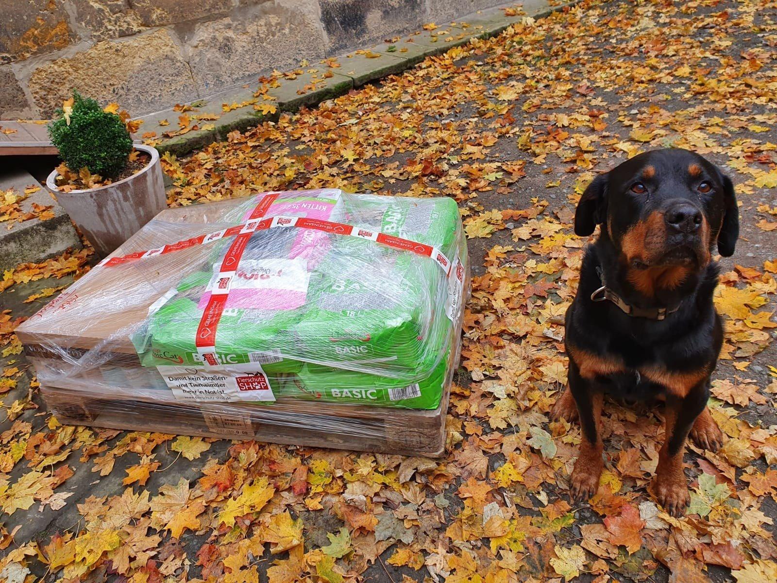 Tierschutzverein Freital und Umgebung eV_WL_Deutschland