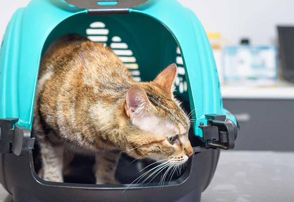 Beitrag-Magazin-Katze