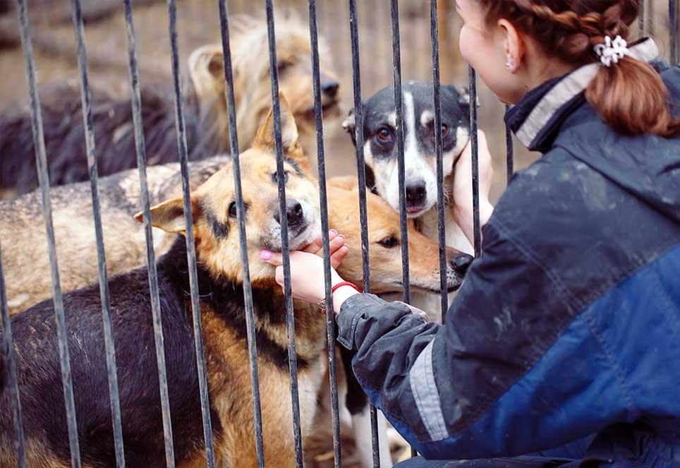 Tierschutz aktiv Bild