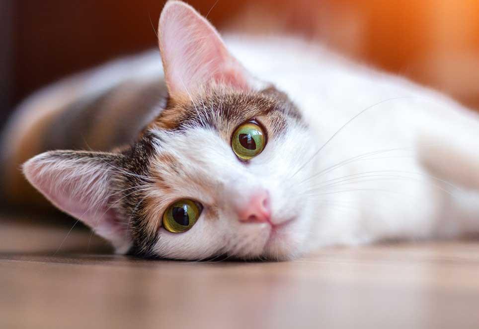 Katzen-Ratgeber Bild