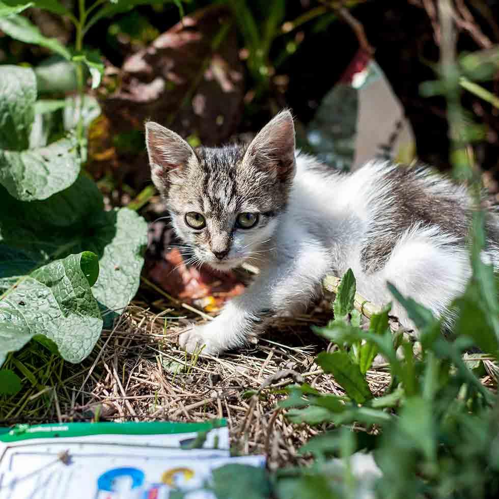 Katze-Corona-Notfallhilfe