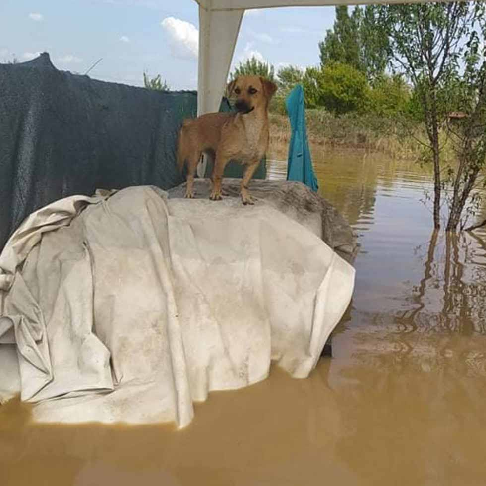 Notfall-Hund-Ueberschwemmung