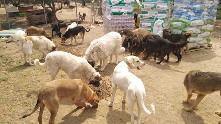 Spendenankunft-Notfallhilfe-Corona-Krise-Tierrettung-Griechenland