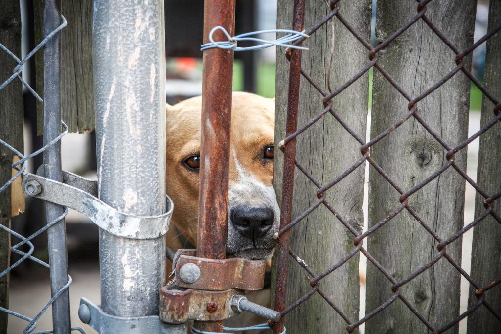 Tierschutz-Magazin-2018_Artikel-Tierquälerei-anzeigen_Hund-Zaun-1024x683