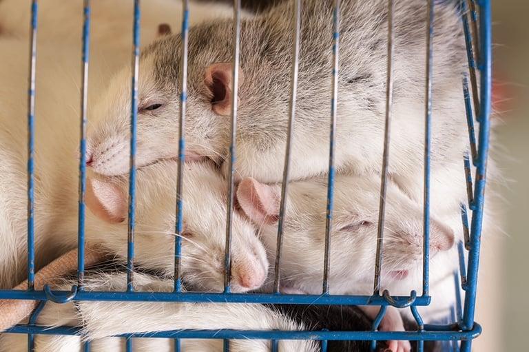 Tierschutz-Shop-Spendenplattform-Magazin-Artikel-Labor-4