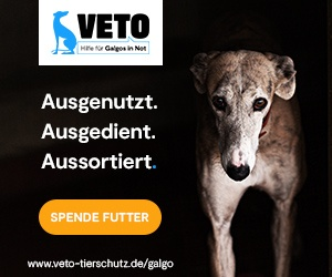 Hilfe fuer Galgos in Not