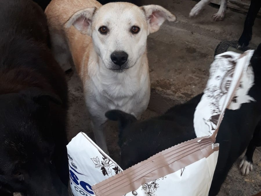 Halona for Dogs eV_ThdM September 2020_Rumänien10