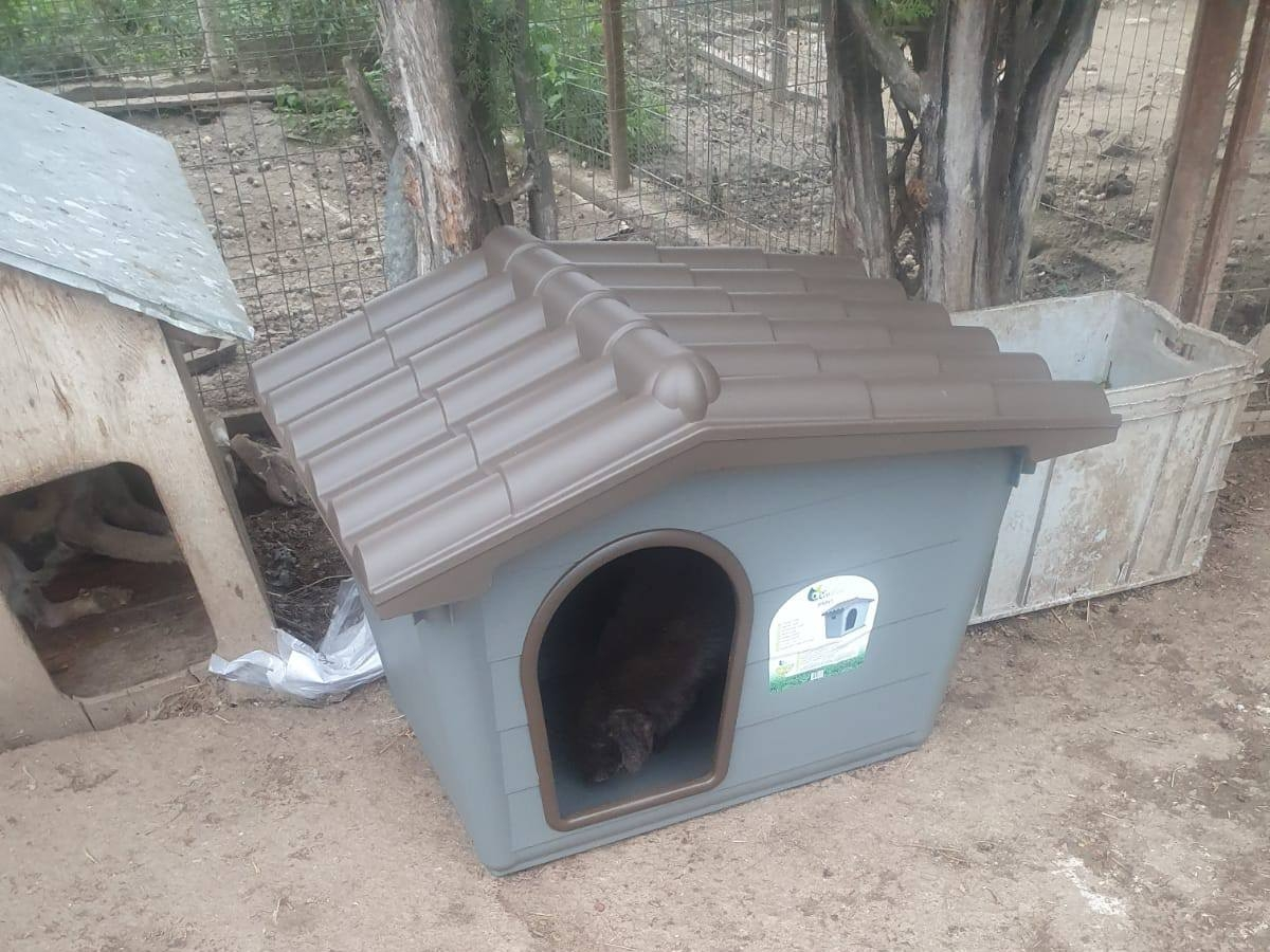 Halona for Dogs eV_ThdM September 2020_Rumänien32