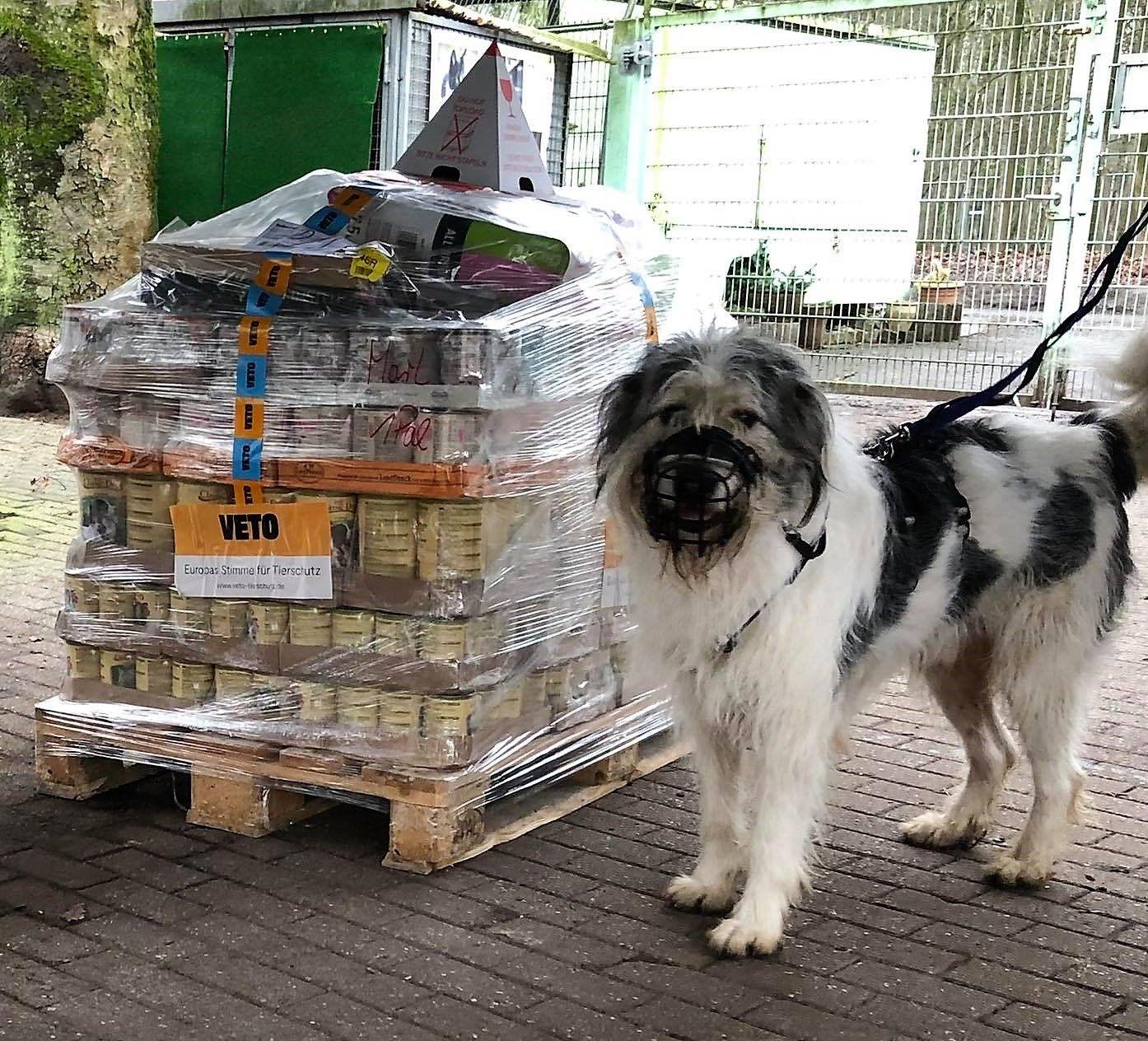 Tierheim Marl – Tierschutzverein Marl:Haltern eV_WL_DE3