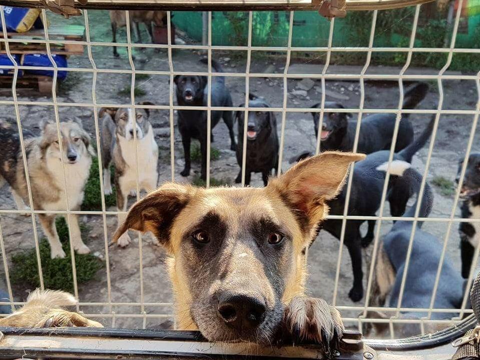 Tierschutz-Werkstatt eV_Soko-Streuner eV_Corona_WL_Rumänien2
