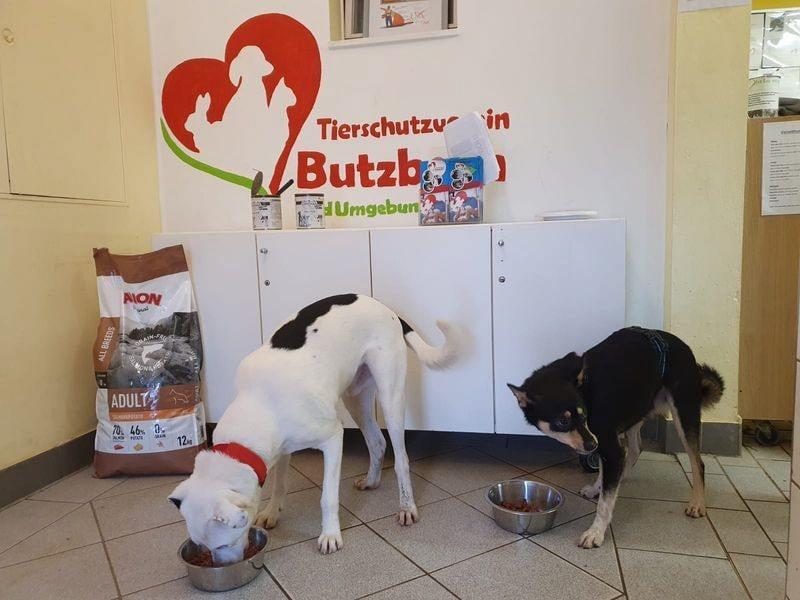 Tierschutzverein Butzbach und Umgebung eV_SM2020_Deutschland4