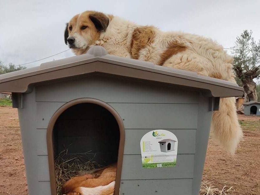 Verein für hilfebedürftige Tiere_ThdM Oktober 2020_Griechenland13