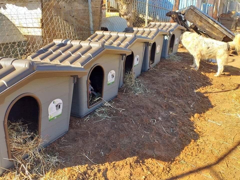 Verein für hilfebedürftige Tiere_ThdM Oktober 2020_Griechenland14
