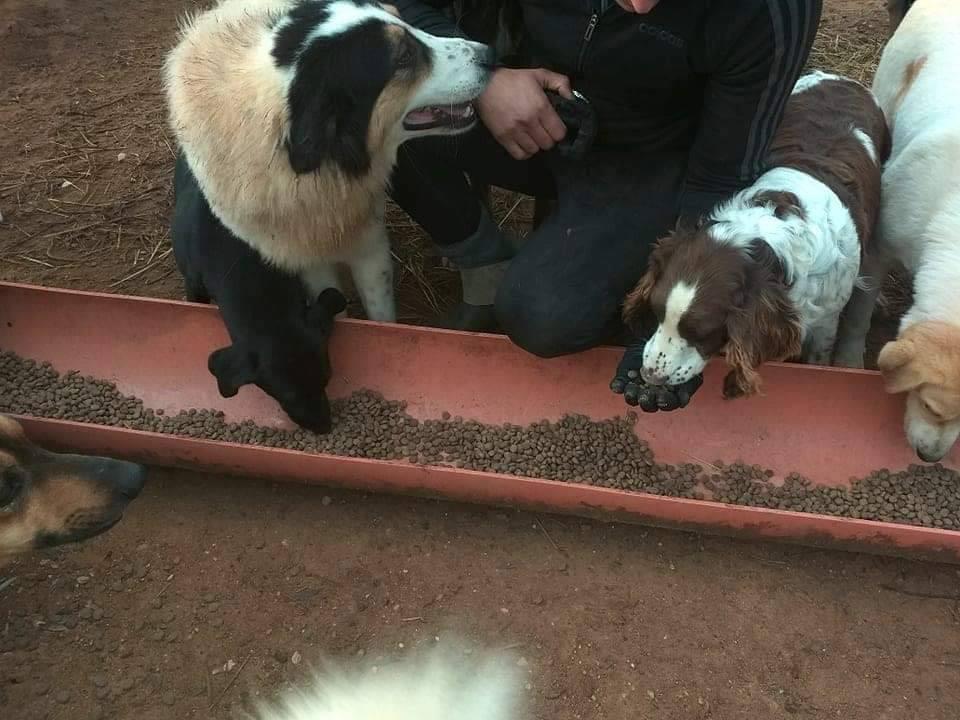 Verein für hilfebedürftige Tiere_ThdM Oktober 2020_Griechenland15
