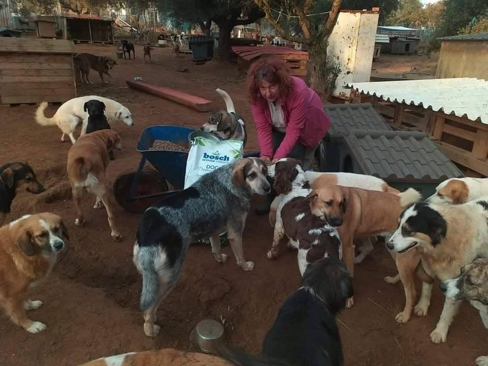 Verein für hilfebedürftige Tiere_ThdM Oktober 2020_Griechenland46