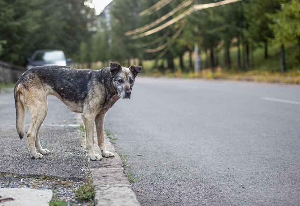 straßenhund steht wartend neben schnellstraße