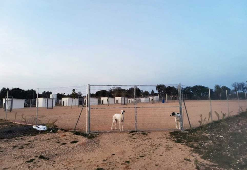 zwei Hunde hinter Zaun