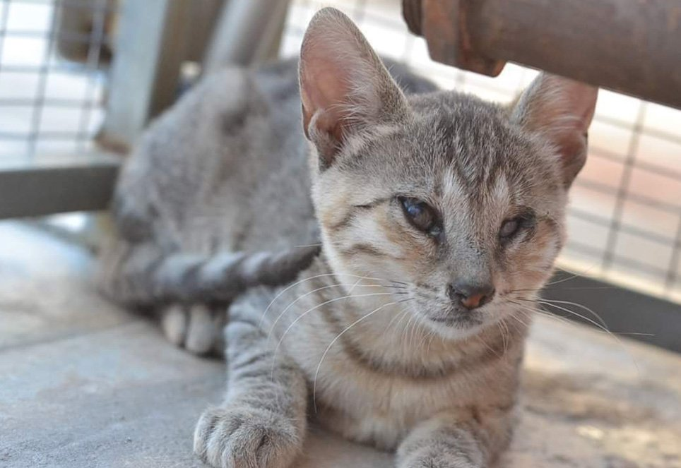Katze-Shanti-Tierschutz