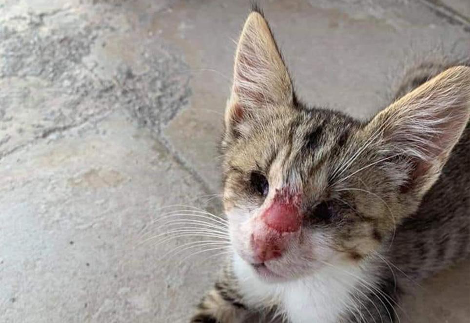 Katze-Soeckchen-Tierschutz