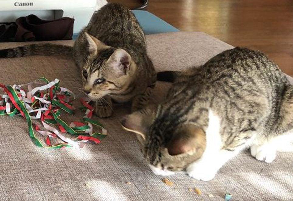 Katze-Soeckchen-heute