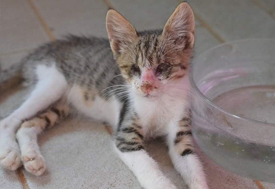 Katze Söckchen war bei ihrer Rettung in einem schlechten Zustand.