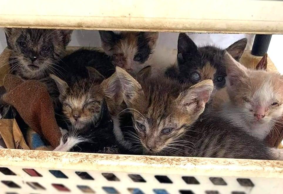 Katzenkinder-soeckchen-shanti