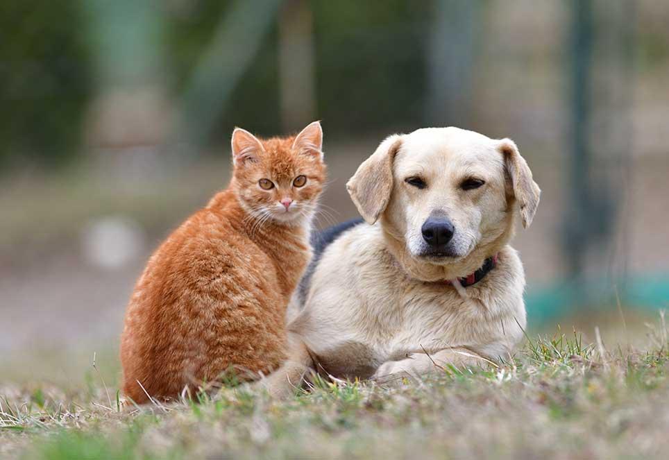 Hund und Katze auf Wiese blicken dich an