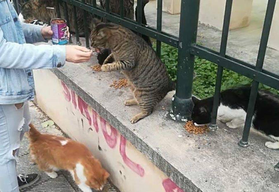 look-tierschutz-strassenkatzen
